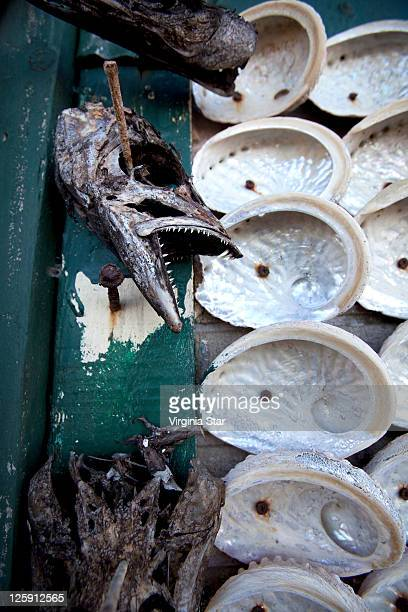 Dead fish and Oyster shells