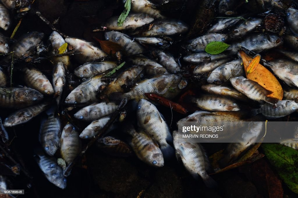 TOPSHOT-HONDURAS-GUATEMALA-SALVADOR-LEMPA-OLOPA-RIVER-POLLUTION : News Photo