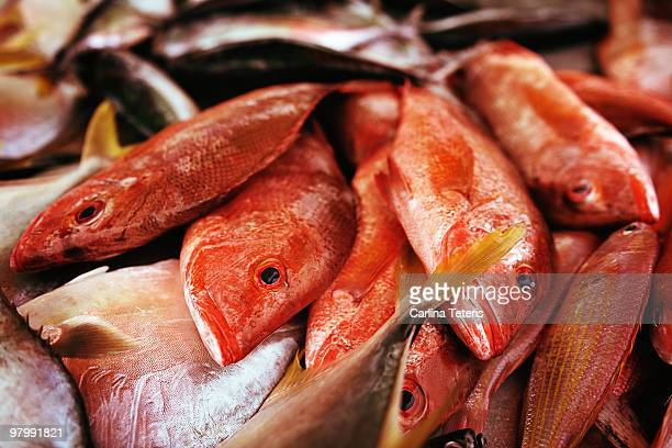 dead fish in a market - redfish stock photos and pictures