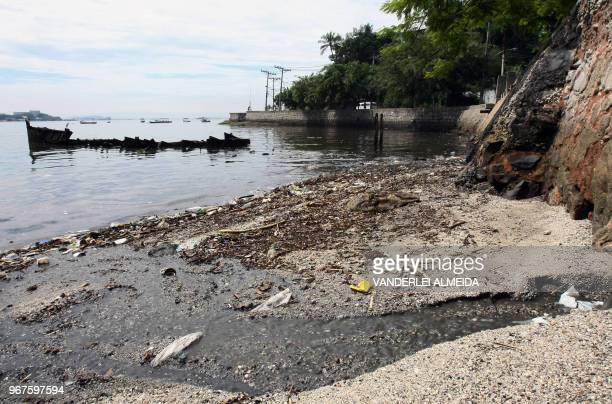 Dead fish lay on the shores of Guanabara Bay state of Rio de Janeiro Brazil on February 25 2008 Some 465 metric tons of waste either domestic trash...