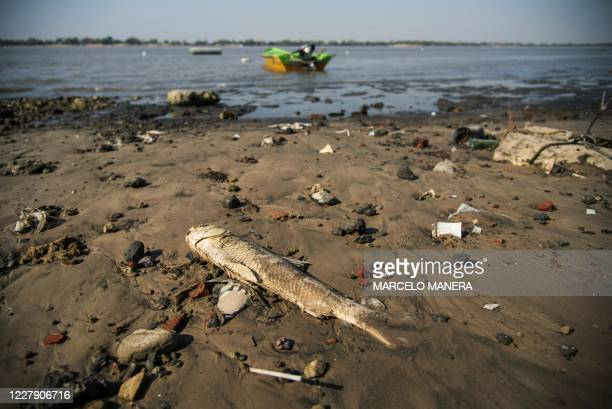 Dead fish lies on the shore of a beach widened as a consequence of a severe drought, in the Argentine city of Rosario, Santa Fe Province, on August...