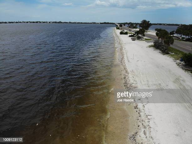 Dead fish line the shoreline along the Sanibel causeway after dying in a red tide on August 1 2018 in Sanibel Florida Red tide season usually lasts...