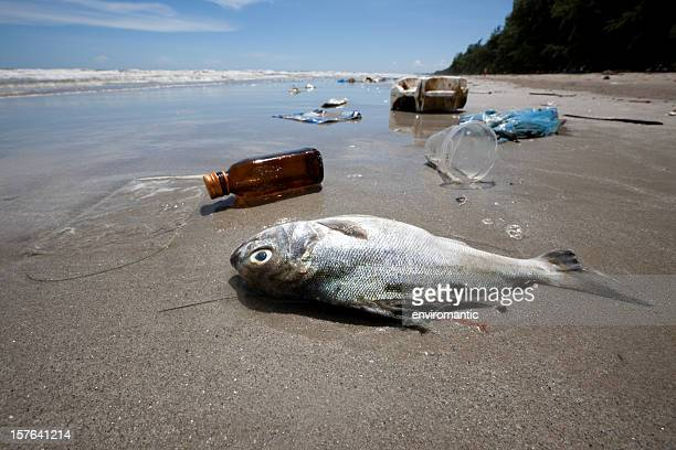 dead fish on a beach surrounded by washed up garbage. - plastic stockfoto's en -beelden
