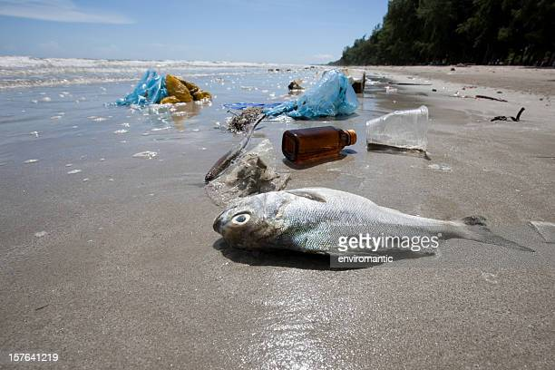 dead fish on a beach surrounded by washed up garbage. - plastic pollution stock pictures, royalty-free photos & images