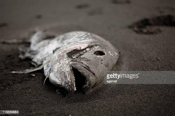 peces muertos - dead rotten fotografías e imágenes de stock