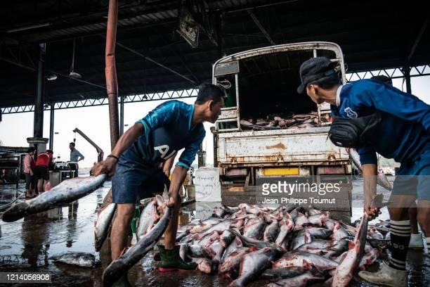 dead fish transportation - fish being thrown to the back of a truck in yangon san pya fish market, myanmar - dead body - fotografias e filmes do acervo