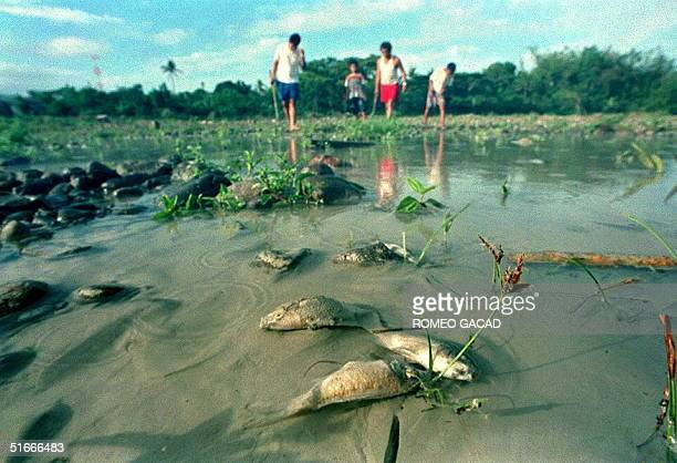 Dead fishes float along the river bank 01 April while residents inspect the Boac river polluted by a massive spill of copper mine waste from the...