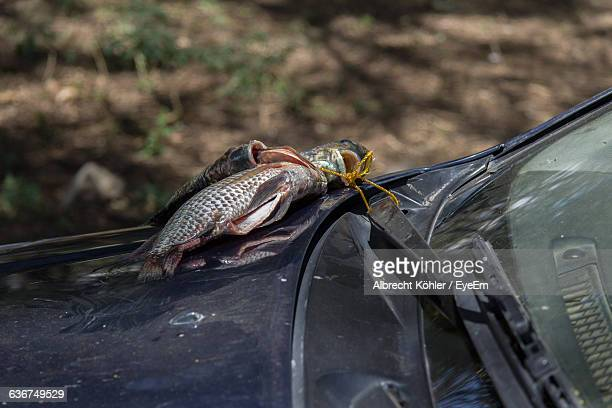 dead fishes on car hood - windshield wiper stock photos and pictures