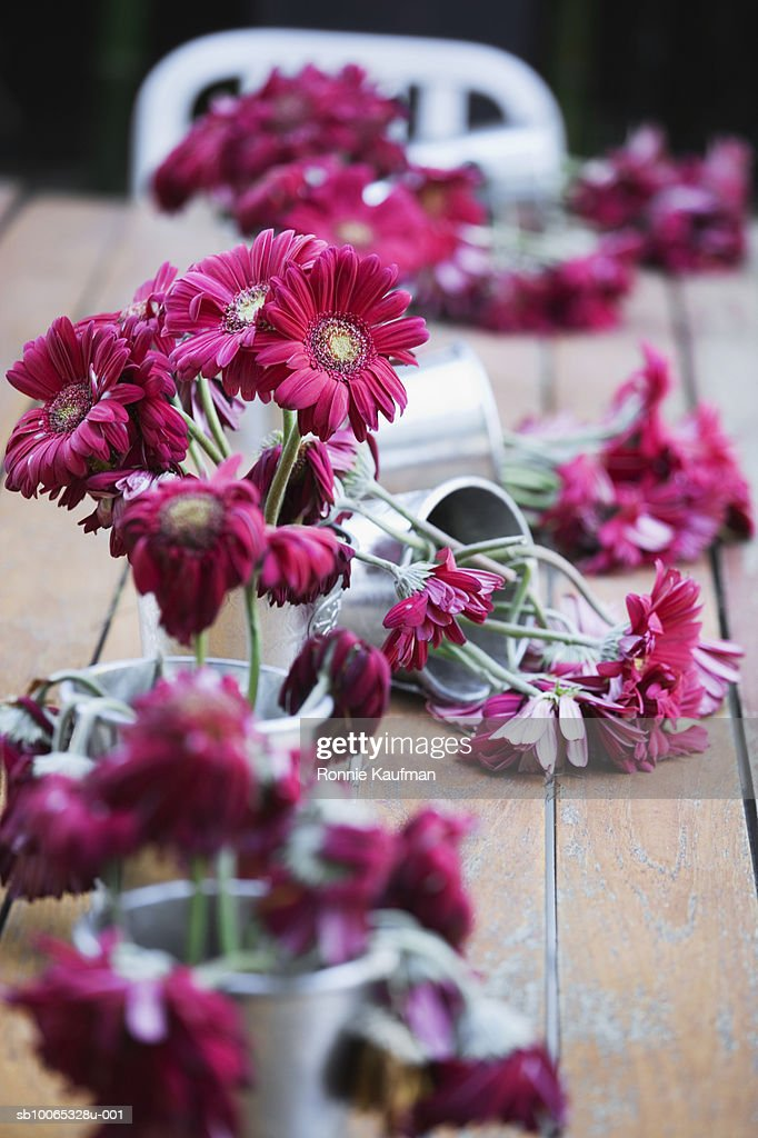 Dead flowers in vase, close-up : Foto stock