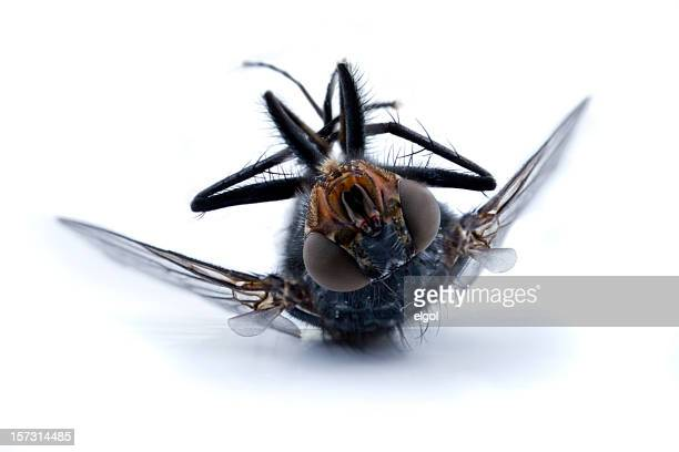 dead fly 2 - fly insect stock pictures, royalty-free photos & images