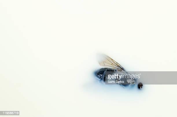 Dead fly floating on milk