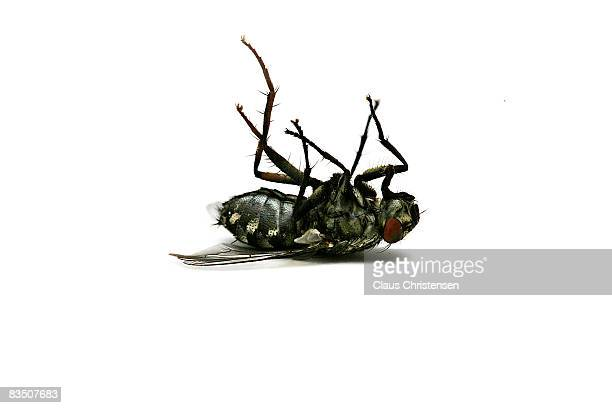 dead fly - insect stock pictures, royalty-free photos & images
