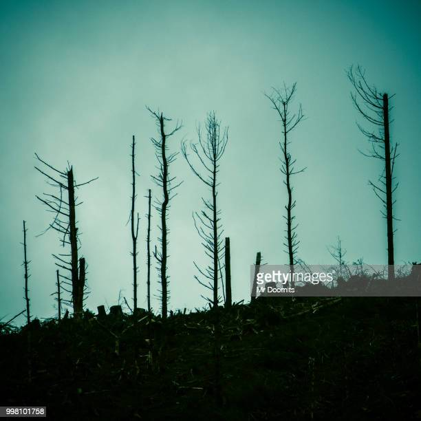 dead forest after a fire - acid rain stock pictures, royalty-free photos & images