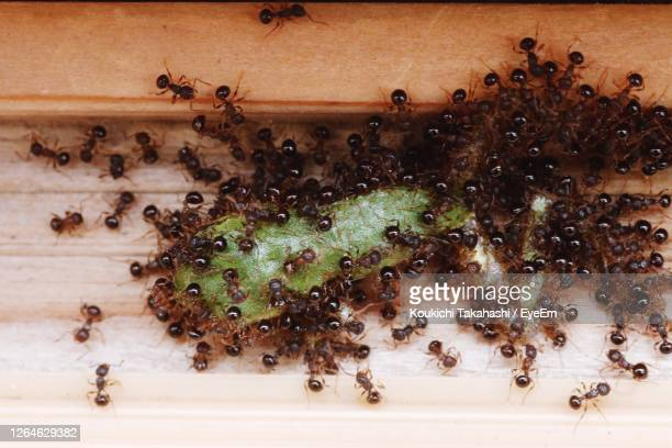 dead frog and ants - koukichi stock pictures, royalty-free photos & images