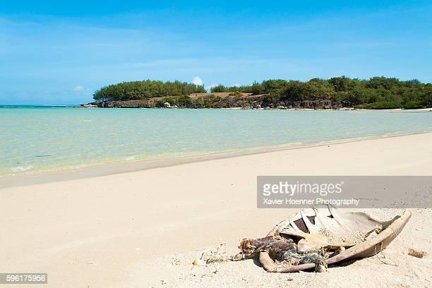 Dead hawksbill sea turtle