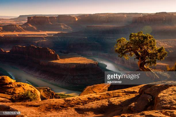 dead horse point over colorado river and canyonlands at sunset – utah, usa - utah stock pictures, royalty-free photos & images