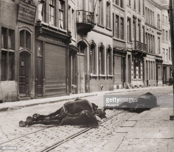 Dead horses in a Belgian street, during the German invasion of World War II, 16th May 1940.