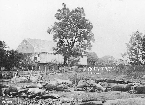 Dead horses of Bigelow's Battery. The horses lay where they died in the Battle of Gettysburg, Pennsylvania, USA, July 1864. .