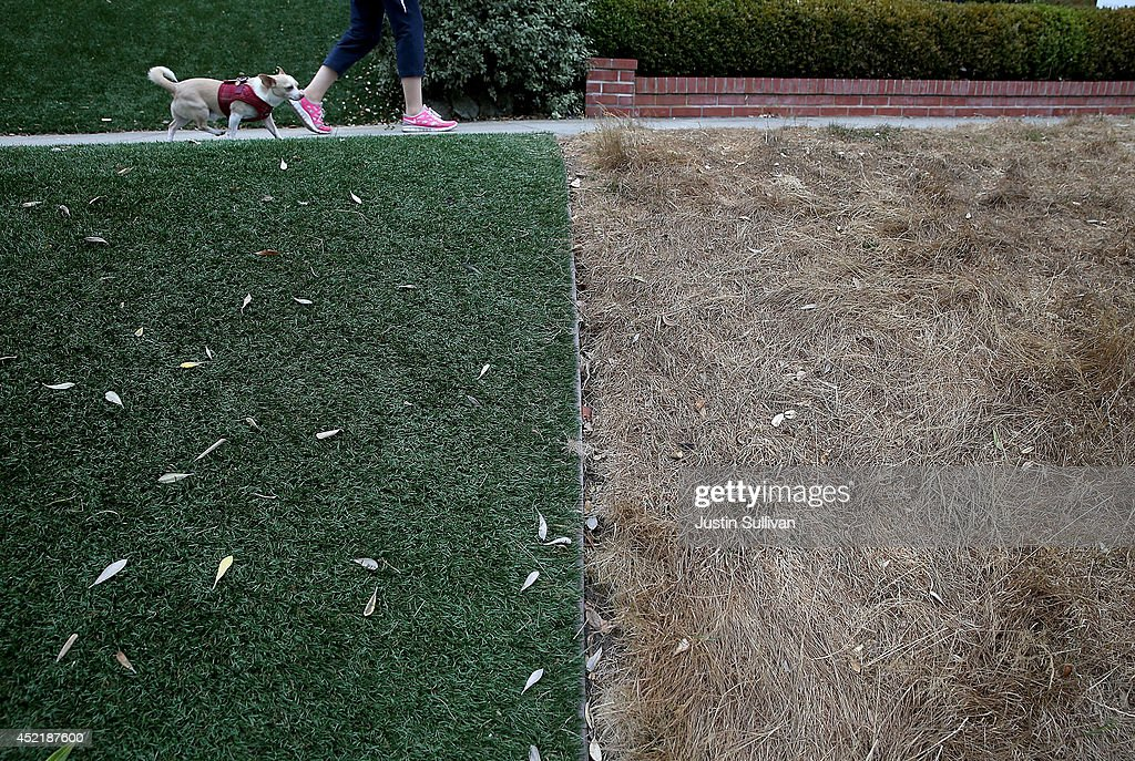 A dead lawn is seen next to an artificial lawn on July 15, 2014 in San Francisco, California. As the California drought continues to worsen and voluntary conservation is falling well below the suggested 20 percent, the California Water Resources Control Board is considering a $500 per day fine for residents who waste water on landscaping, hosing down sidewalks and car washing.