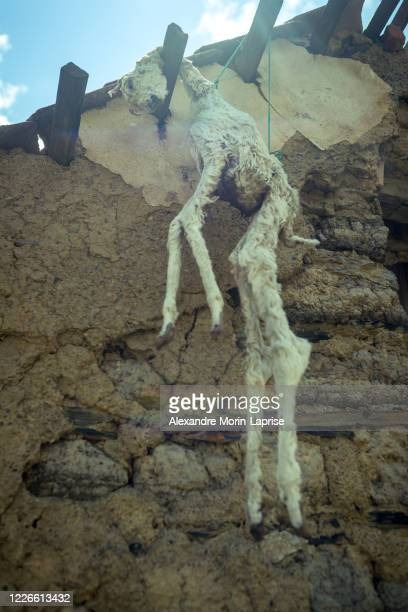 a dead llama fetus hanging from the roof of a house as a religious ritual in the bolivian altiplano - adobe stock pictures, royalty-free photos & images