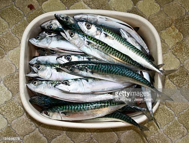 dead mackerel - s0ulsurfing stock pictures, royalty-free photos & images
