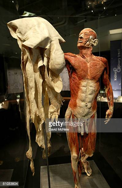 A dead man holds up his own skin at the Body Worlds The Anatomical Exhibition of Real Humans Bodies show at the California Science Center on July 7...