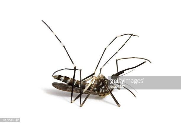 dead mosquito # 2 - dead stock pictures, royalty-free photos & images