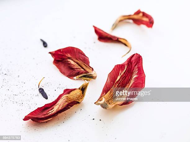 dead petals - dead stock pictures, royalty-free photos & images