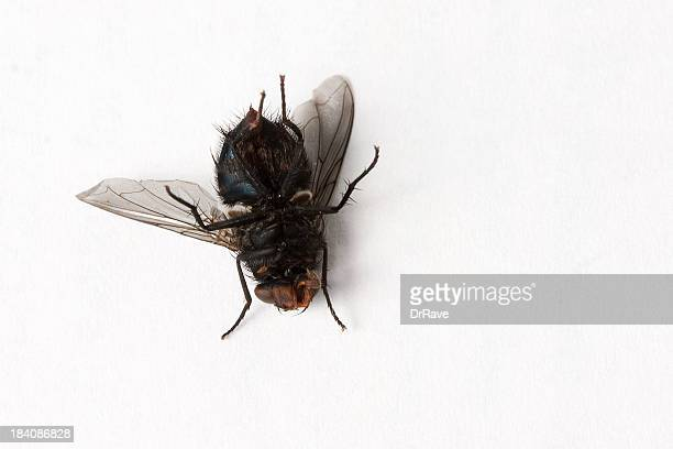 dead ! - pest stock photos and pictures