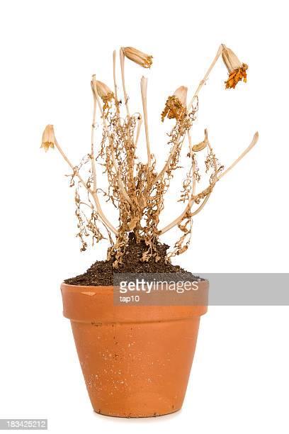dead plant - dead plant stock pictures, royalty-free photos & images