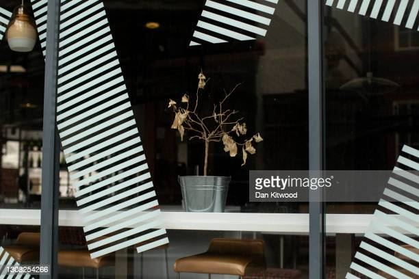 Dead plant stands in a cafe window on March 17, 2021 in London, England. A year since the British government issued its first stay-at-home order in...