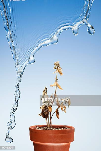 dead plant under a waterfall - dead plant stock pictures, royalty-free photos & images