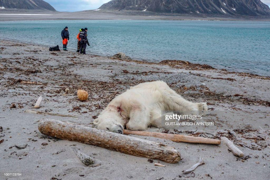 TOPSHOT-NORWAY-ARCTIC-ANIMALS-POLAR-BEAR : News Photo