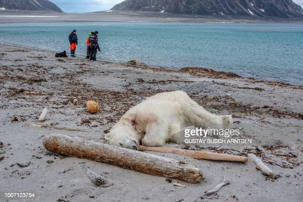 TOPSHOT A dead polar bear lays at the beach at Sjuøyane north of Spitzbergen Norway on July 28 2018 Norwegian authorities said the polar bear...