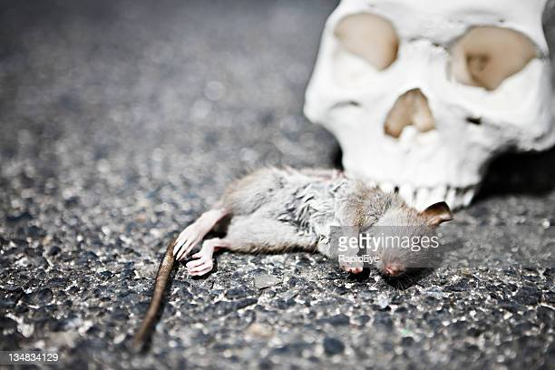dead rat with human skull - epidemic stock pictures, royalty-free photos & images