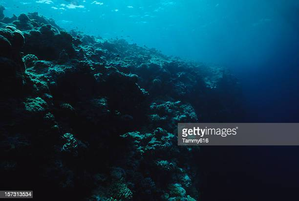 dead reef - deep stock pictures, royalty-free photos & images