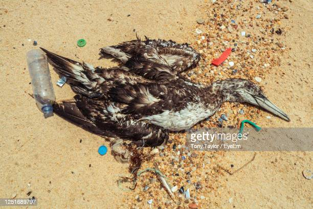 dead seagull washed up on the beach surrounded by waste plastic - gannet stock pictures, royalty-free photos & images
