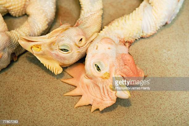 dead skinned chickens, close-up of heads - ugly bird stock pictures, royalty-free photos & images