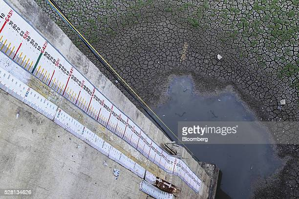 Dead snakes lie in a small pond of water next to cracked earth at the base of a scale measuring the water level of the driedup Manjara Dam near Latur...