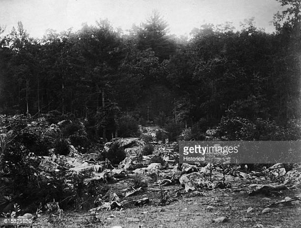 Dead Soldiers After Battle of Gettysburg