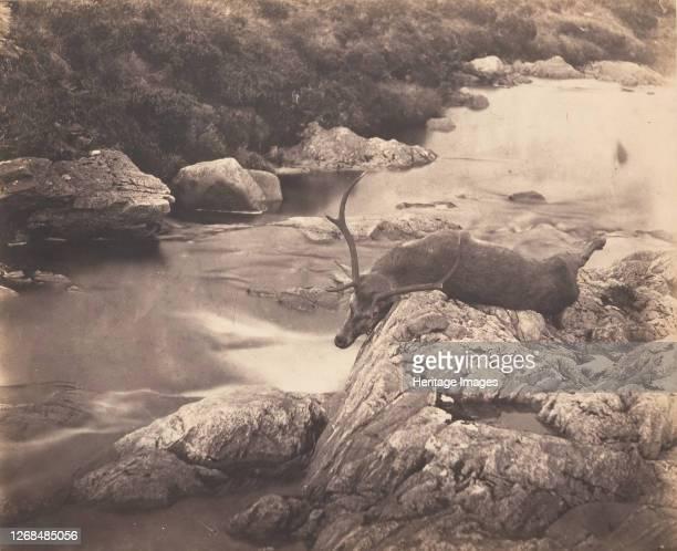 Dead Stag, circa 1857. Artist Horatio Ross.