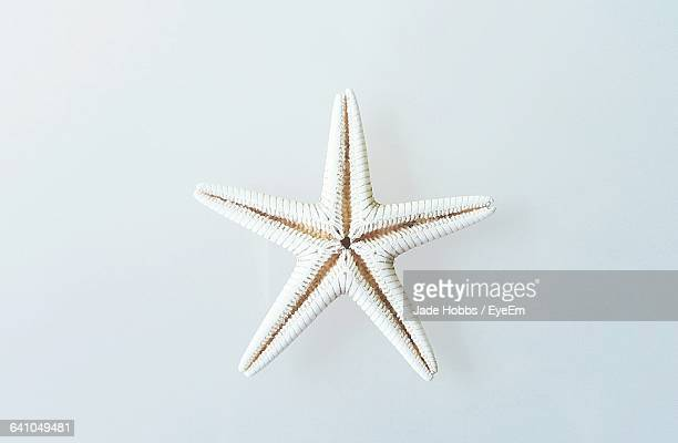 Dead Starfish Against White Background