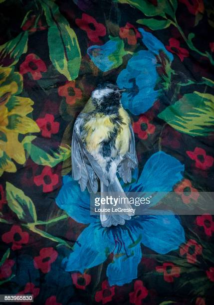 A dead tit laid on a flowered fabric