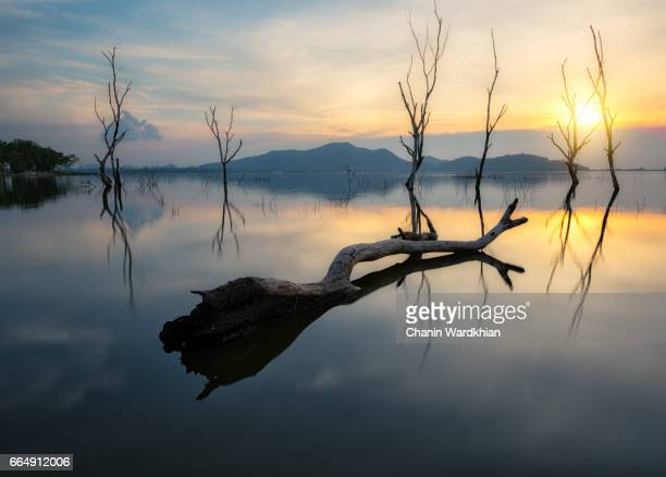 dead tree at bangphra water reservoir , chonburi , thailand - environmental damage stock pictures, royalty-free photos & images