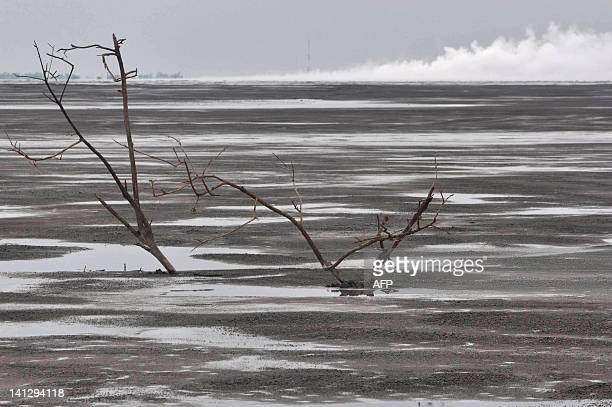 Dead tree branches are submerged by a sea of mud as gas billows from the mud volcano in Sidoarjo in East Java on February 12, 2010. Scientists...