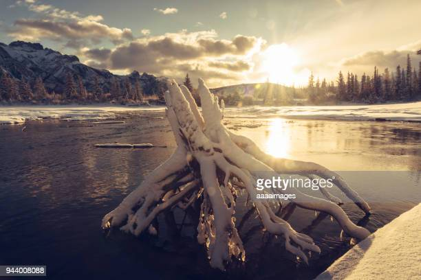 dead tree covered by snow in water against sunset sky - wilderness area stock pictures, royalty-free photos & images