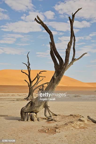 Dead tree in a desert.