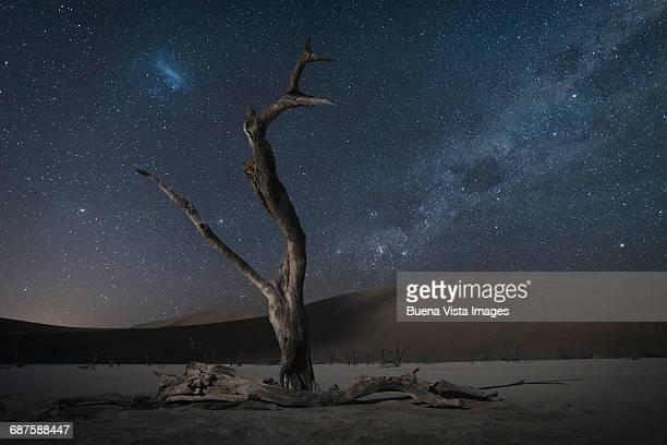 Dead tree in a desert under stars