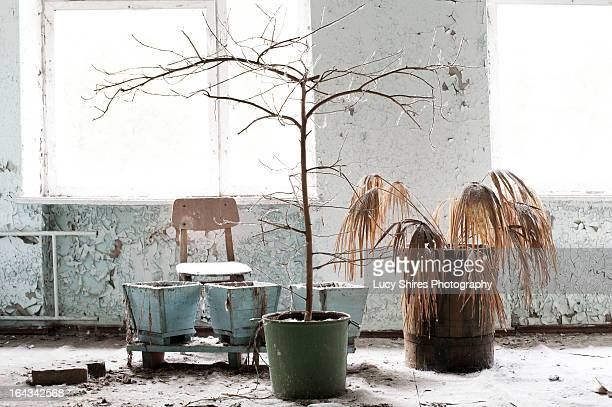 dead tree in an abandoned building - lucy shires stock pictures, royalty-free photos & images