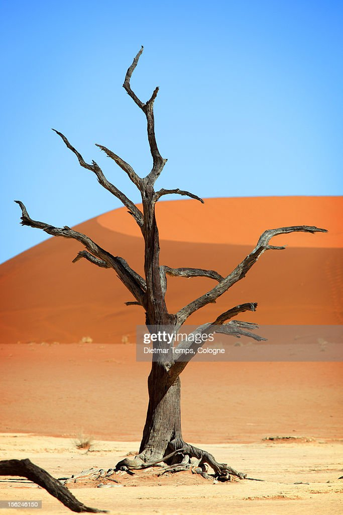 Dead tree in Deadvlei, Namibia : Stock-Foto